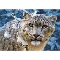 Castorland Puzzle Snow Leopard (1500 Parça)