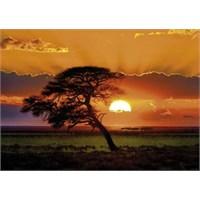 Heye Sunny Tree (1000 Parça)