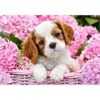 Castorland 500 Parça Pup İn Pink Flowers Puzzle