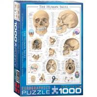 Eurographics 1000 Parça İnsan Kafatası Bilimsel Puzzle
