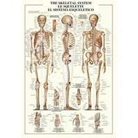 The Skeletal System (1000 Parça)