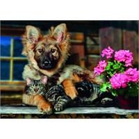 Dog And Cat (300 Parça)