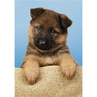 German Shepherd Puppy (500 Parça Puzzle)