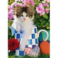 Tabby Kitten (1000 Parça Puzzle)