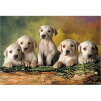 Educa Puzzle Baby Labradors (500 Parça)
