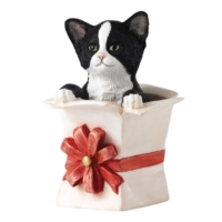 Border Fine Arts Purrfect Present Biblo