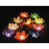 Toptancı Kapında Nilüfer (Çiçek) Su Feneri (20 Adet)