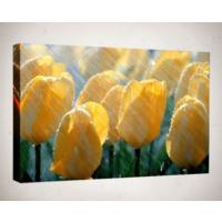 Kanvas Tablo - Çiçek Resimleri - C153