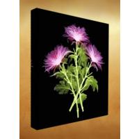 Kanvas Tablo - Çiçek Resimleri - C161