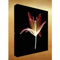 Kanvas Tablo - Çiçek Resimleri - C162