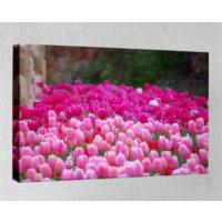 Kanvas Tablo - Çiçek Resimleri - C194