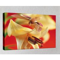 Kanvas Tablo - Çiçek Resimleri - C199