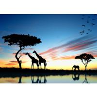 Duvar Tasarım DC 2076 Animal&Sea Kanvas Tablo - 50x70 cm