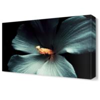 Dekor Sevgisi Beyaz Lale Tablosu 45x30 cm