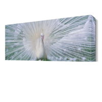 Dekor Sevgisi Beyaz Tavus Kuşu Tablosu 45x30 cm