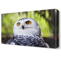 Dekor Sevgisi Beyaz Baykuş Canvas Tablo 45x30 cm