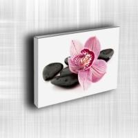 Doku Canvas Baskı Çiçek- CIGE619