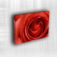 Doku Canvas Baskı Çiçek- CIGE041