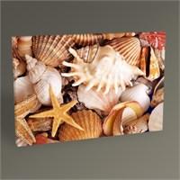 Tablo 360 Deniz Kabukları Tablo 45X30