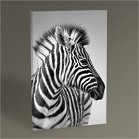 Tablo 360 Zebra Tablo 45X30