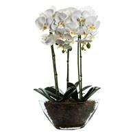 Altıncı Cadde Saksılı Orkide Beyaz