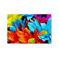 Tictac Renkli Çiçekler 3 Kanvas Tablo - 40X60 Cm