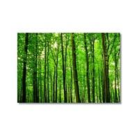 Tictac Yeşil Ağaçlar Kanvas Tablo - 60X90 Cm