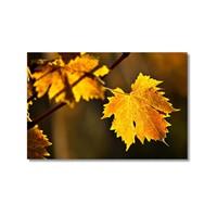 Tictac Sarı Yapraklar 2 Kanvas Tablo - 50X75 Cm