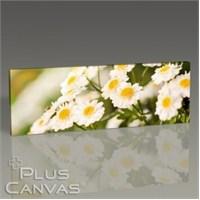 Pluscanvas - Flowers I Tablo