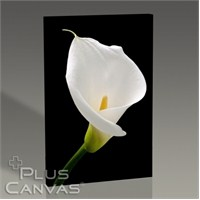 Pluscanvas - White Lillies Tablo