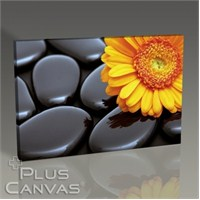 Pluscanvas - Black Pebbles And Flower I Tablo