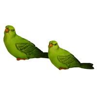 İkili Yeşil Renkli Kanarya