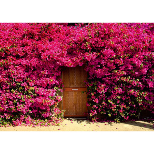 Fotocron Red Flowers Door Tablo