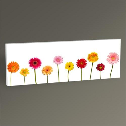 Tablo 360 Flowers Tablo 60X20