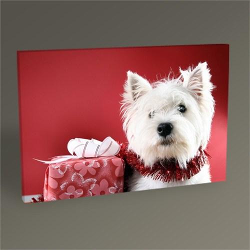Tablo 360 Beyaz Köpek Yavrusu Tablo 45X30