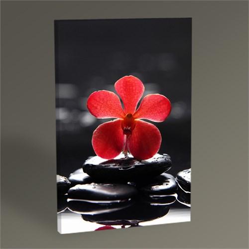 Tablo 360 Kırmızı Orkide Tablo 45X30
