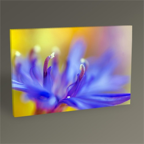 Tablo 360 Abstract Flower Tablo 45X30