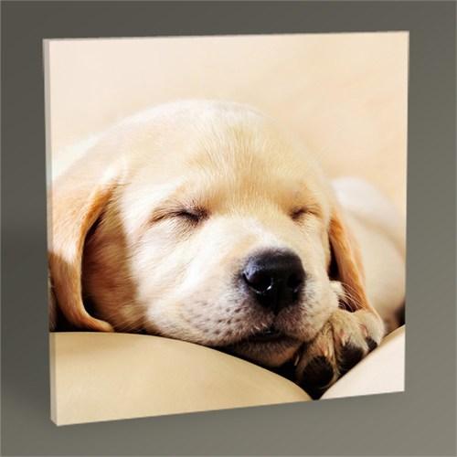 Tablo 360 Golden Dog Tablo 30X30