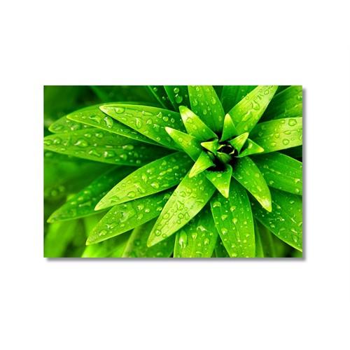 Tictac Yeşil Yapraklar Kanvas Tablo - 50X75 Cm