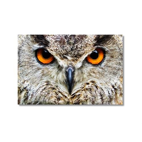 Tictac Baykuş Kanvas Tablo - 40X60 Cm