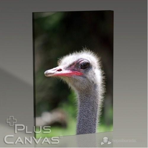 Pluscanvas - Oktay Toygar - Ostrich Tablo