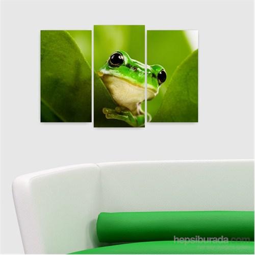 Dekoriza Meraklı Kurbağa 3 Parçalı Kanvas Tablo 80X50cm