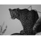 Innova Night Prowl 60X80 Cm Cam Tablo