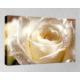 Kanvas Tablo - Çiçek Resimleri - C178