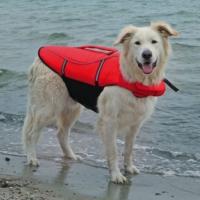 Trixie Fosforlu Köpek Can Yeleği (M) 45-72 Cm 30 Kg