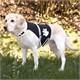 Trixie Köpek Işıklı Fosforlu Güvenlik Yeleği M,Siy