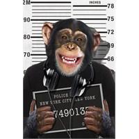 Chimp Mugshot Maxi Poster