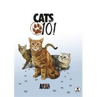 Cats 101 (DVD)