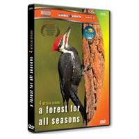 A Forest For All Seasons (Dört Mevsim Ormanı)