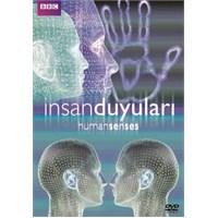 Human Senses (İnsan Duyuları)